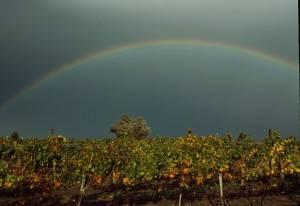 Burgenland - Vineyard, rainbow