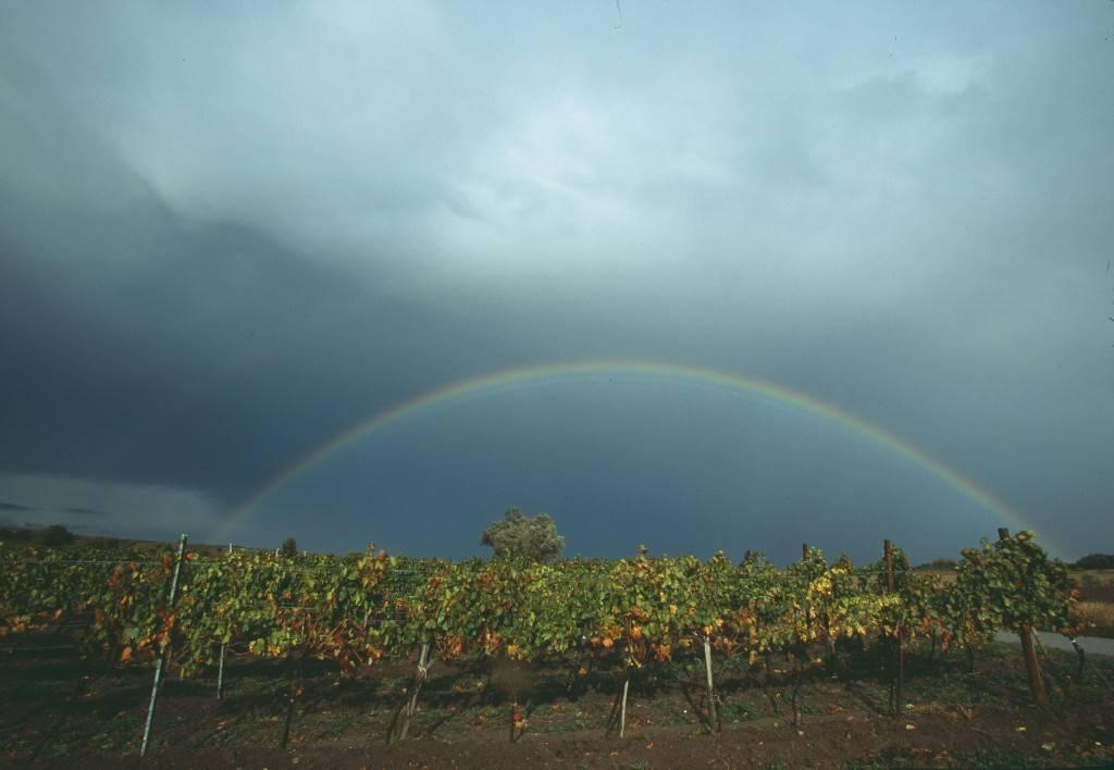Burgenland - Vineyard with a rainbow