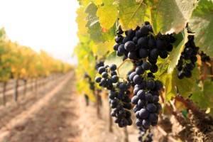 pacifica_winery.jpg