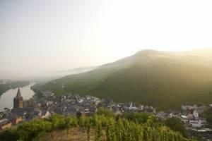 Doctor vineyard at sunrise