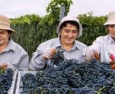 Winegrowing in Armenia, a historical view