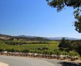 How new generation wines achieved cult status in Napa Valley