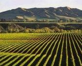 Top New Zealand Sauvignon Blancs in India