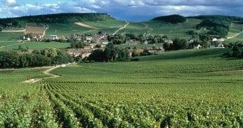 India and Burgundy – Bringing the best of both worlds together