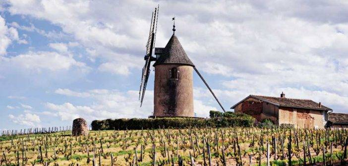 Burgundy, a must in every wine lover's cellar says Steven Spurrier