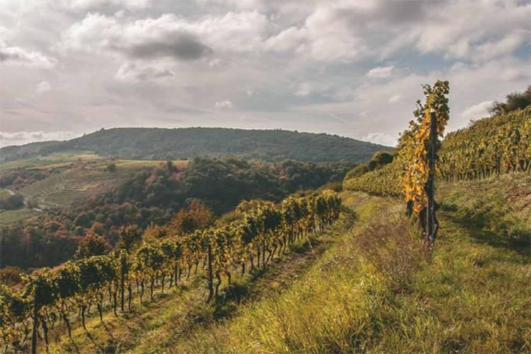 Scharlachberg Hill